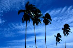 070219_palm_trees.JPG